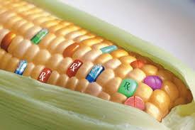 La biotecnología hace posible un mundo de posibilidades alimenticias a disposición de la humanidad